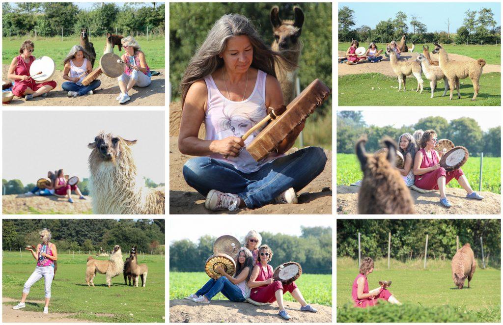 Ein Besuch bei den Friesen Lamas im Norden