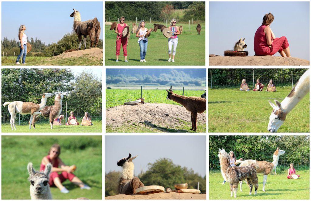 Ein Besuch bei den Friesen Lamas in Braderup, www.friesen-lamas.de